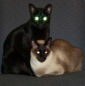 Devil-cats