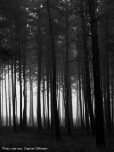 10030006_dark_wood_s